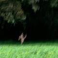 natural-dance-no_40