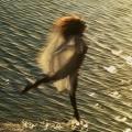 natural-dance-no_51